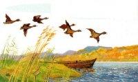 18 августа открытие охоты на болотно-луговую, степную и полевую дичь, 25 августа - открытие осенней охоты 2012 на водоплавающую и боровую дичь