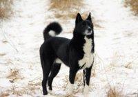 Иркутская городская выставка охотничьих собак 2014