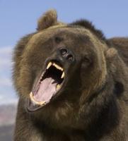 Шелеховское отделение ИООООиР предлагает охоту на бурого медведя в весенний период 2014 года
