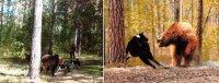 Испытания по медведю 27 сентября 2014 г.