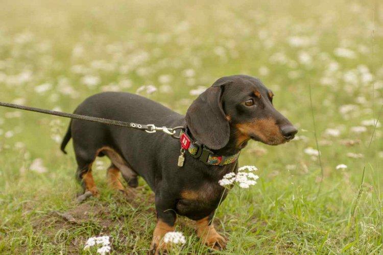 Отчет о мероприятиях по собакам 2021
